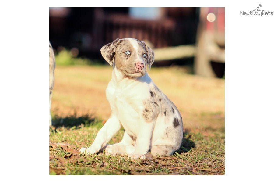 Dog Training Birmingham Al