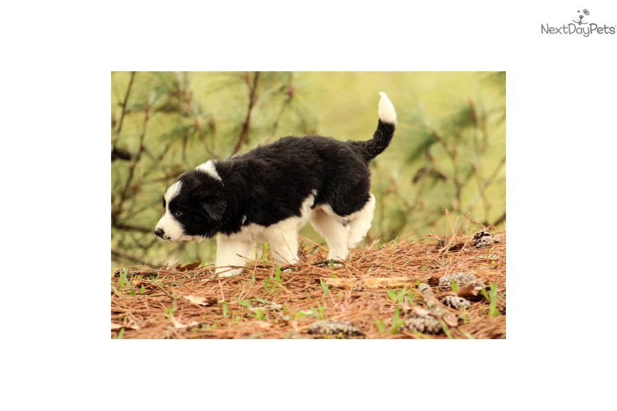 Great Pyrenees Female Dog Names