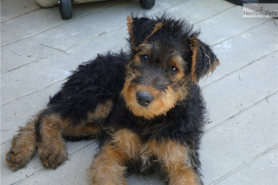 Family Dogs Breeds For Sale In Georgia