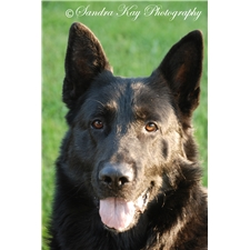 View full profile for Silver Creek Shepherds