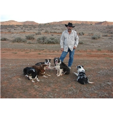 View full profile for Sandstone Border Collies