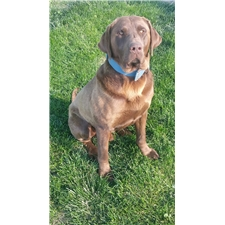View full profile for Wineinger Labradors