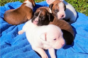 Picture of Mias pups