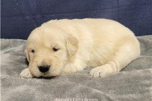 Picture of Aurora Lt brown