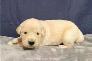 Picture of Aurora Orange