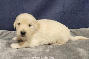 Picture of Aurora Lt blue