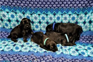 Picture of Frankies pups
