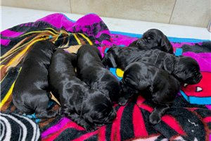 Picture of Ladys pups