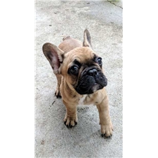 View full profile for Frenchies By Zelda