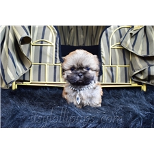 View full profile for Le Itsy Lolli Pups Shoppe