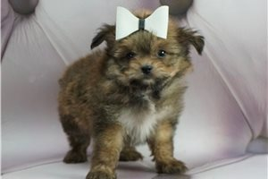 Picture of Tiny Tinker