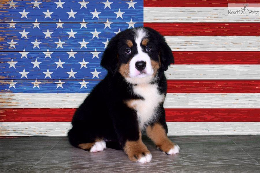Bernese Mountain Dog Registered Names