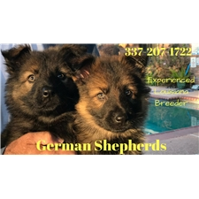 View full profile for Louisiana Shepherd Puppies