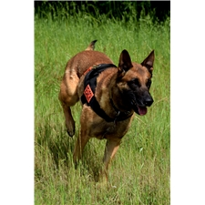 View full profile for North River K9