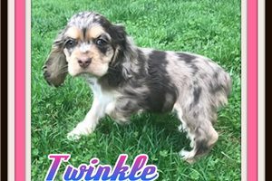 Picture of Twinkle