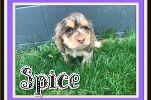 Picture of Spice