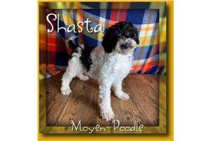 Picture of Shasta
