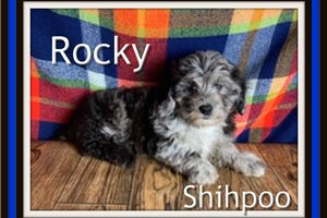 Picture of Rocky