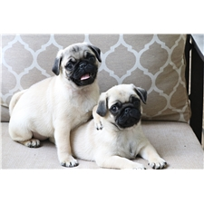 View full profile for Pugs