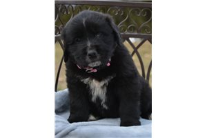 MollySpecialNeed | Puppy at 13 weeks of age for sale