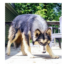 View full profile for Winter Mountain Timber Dogs