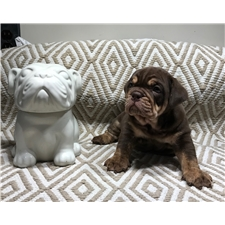 View full profile for Bear Country Bulldogs