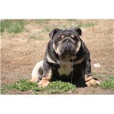 View full profile for Chocolate City Bulldogs
