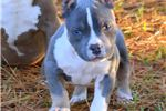 Picture of  Beautiful Blue Tri Pocket Girl