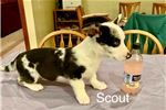 Picture of Sir Scout
