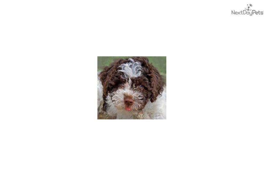 Dog Grooming Bellingham