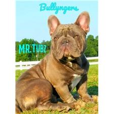 View full profile for Bullynger Bulldogs