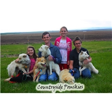 View full profile for Countryside Pomskies