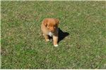 Picture of Toller Rudy