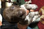Picture of Great GSP