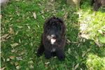 Picture of Ella Mae