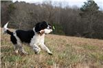 Picture of (Yellow Collar Male)
