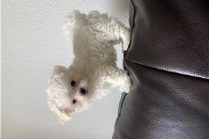 Picture of Teddy