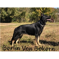 View full profile for Genuine German Shepherds