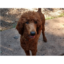 View full profile for Legacy Pets