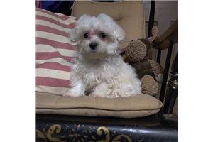 Picture of Mason