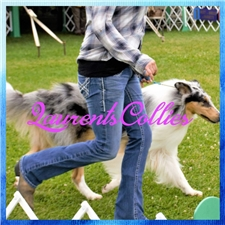 View full profile for Laurents Collies