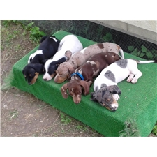 View full profile for Southern Dachshunds