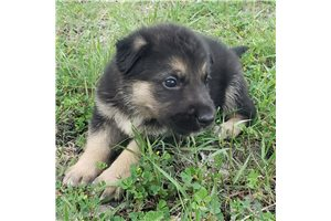 Picture of Dalila