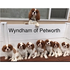 View full profile for Wyndham Of Petworth
