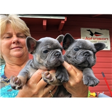 View full profile for Rocky Bound French Bulldogs