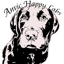 View full profile for Anvic Happy Labs