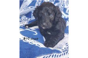Picture of Cisco