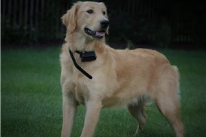 Picture of Wrangler