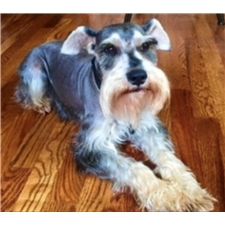 View full profile for Bray Schnauzers