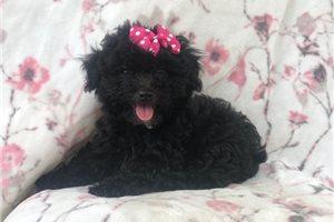 Picture of Harper